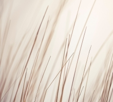 Porya Hatami – Shallow Remixed