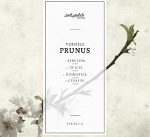 Versible – Prunus EP