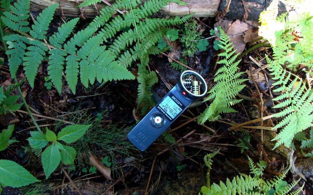 field recorder
